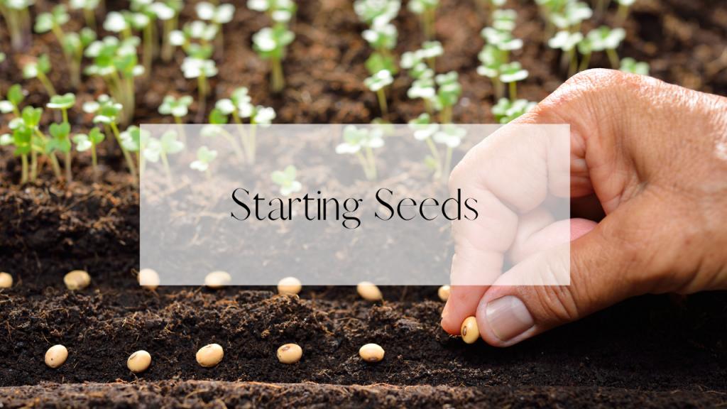 hand planting seeds inside.