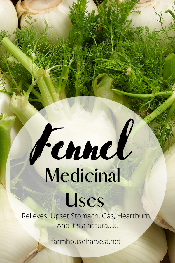fennel bulbs ready to cook with text