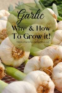 garlic how to
