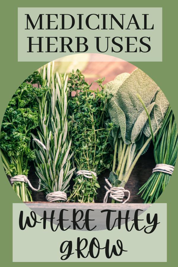 Medicinal herb uses & growing zones