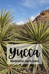 yucca plant and text