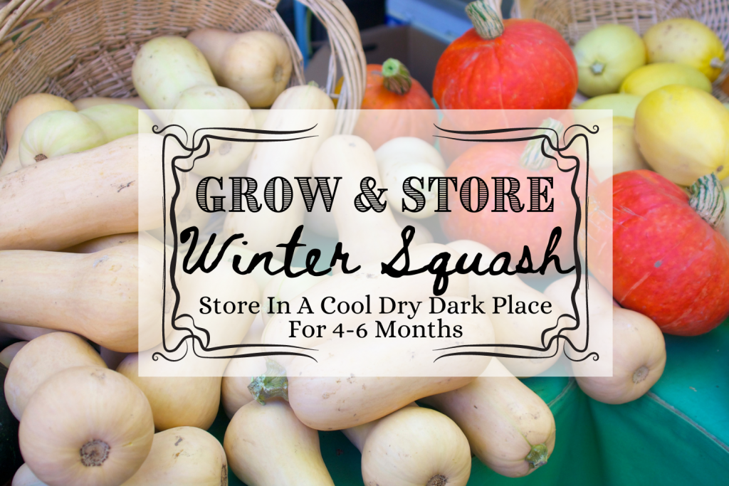 winter squash food storage and text